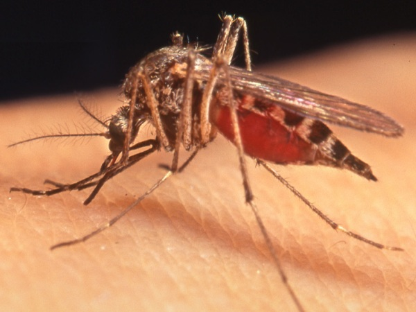How to Get Rid of Mosquito bites Indoors