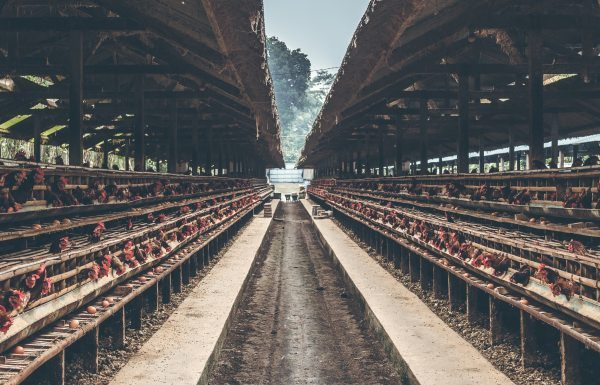 Increasing demand of LED Lighting in Poultry Farming
