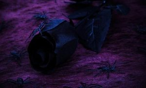 List of Most Elegant Black Flowers that you Probably Didn't Know