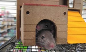 Psychological Effects of Having Pests at Home